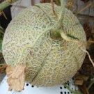 20 seed of Organic round mellon cantaloupe guaranteed to grow from NY