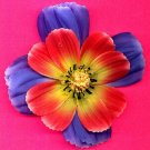 #CLIP-47: Tropical Flower Hair Clothing Accessories Clip, Pin and Ponytail Holder