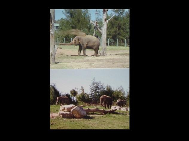 PAIR OF ELEPHANT POSTCARDS SHOWING BOTH THE AFRICAN AND ASIAN ELEPHANT