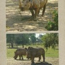 PAIR OF RHINOCEROS POSTCARDS SHOWING BOTH THE BLACK AND WHITE SQUARE LIPPED RHINOCEROS