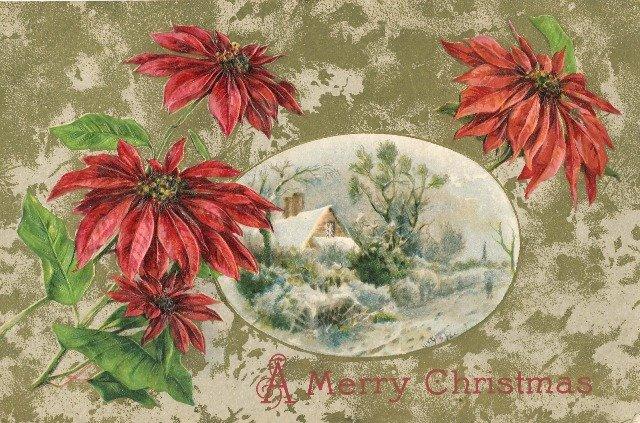 Vintage Christmas Postcard Winsch Back  Embossed Poinsettias framing snow scene Gold background