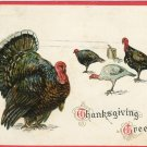 c 1912 Tuck Thanksgiving Postcard Embossed Turkeys