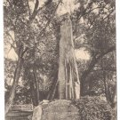 Indian Monument Stockbridge MA Vintage Postcard