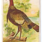 1908 Julius Bien Turkey 9001 Vintage Embossed Thanksgiving Postcard