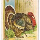 1908 Julius Bien Turkey Hole in Fence 9003 Vintage Thanksgiving Postcard