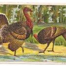 1908 Julius Bien Tom Hen Turkey 9102 Vintage Embossed Thanksgiving Postcard