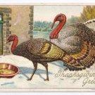 1908 Julius Bien Turkeys Eating Tom Hen Vintage Embossed Thanksgiving Postcard