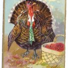 Tuck Runaway Turkey Vintage Thanksgiving Postcard