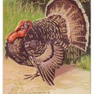Tom Turkey Vintage Thanksgiving Postcard Embossed with Gold Accents