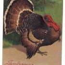 Vintage Thanksgiving Postcard Tom Turkey German PFB