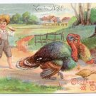 Child with Turkeys Vintage Thanksgiving Postcard