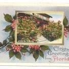 Florida Christmas Greetings Poinsettias Vintage Postcard