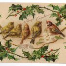 Birds Holly Embossed Vintage Christmas Postcard