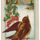 Bird Holly Embossed Vintage Christmas Postcard