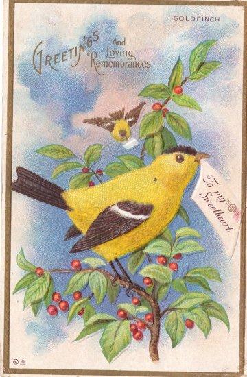 Goldfinch Bird Embossed Vintage Greetings Postcard Nash