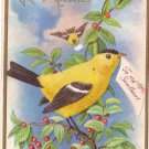 Goldfinch Bird Embossed Vintage Greetings Postcard Nash