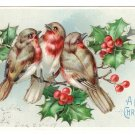 Birds Holly Finches Embossed Glitter Vintage Christmas Postcard