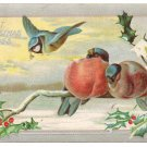 Winter Birds Blue Jay Holly Bough Embossed Silver Vintage Christmas Postcard