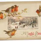 Birds Embossed Vintage Christmas Postcard Winsch