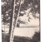 North Shore Birches ME Vintage Postcard Albertype