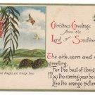 California Pepper Tree Vintage Christmas Postcard 1922