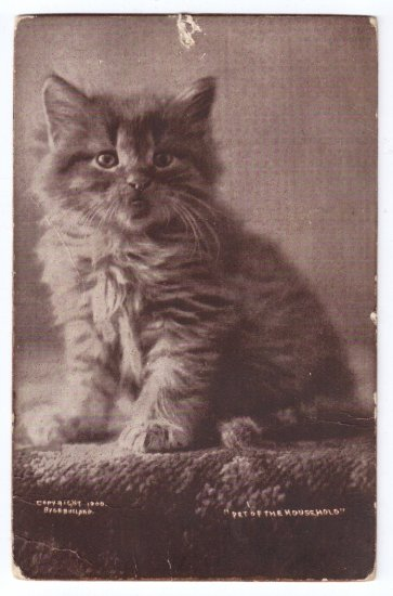 C.E. Bullard Cat Antique Postcard Sheahan Cute Kitty Series