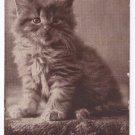 C.E. Bullard Cat Antique Postcard Sheahan Cute Kitty Series