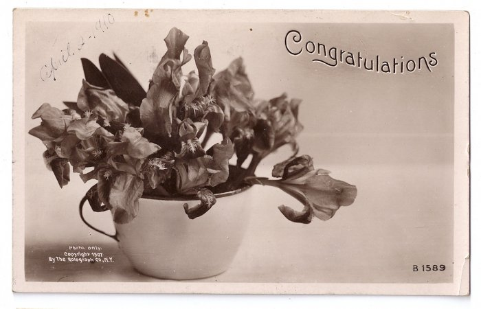 Rotograph 1907 Real Photo Congratulations B&W RPPC Iris Flowers