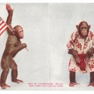 Chimpanzee Baldy Vintage Patriotic Postcard NY Zoological Park US Flag