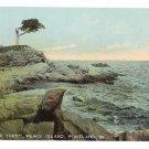 Pair Tree Peaks Island Portland ME Leighton 10050 ca 1910