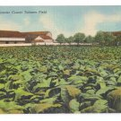 Lancaster Pa Tobacco Field Vintage Linen Postcard Curteich 1950