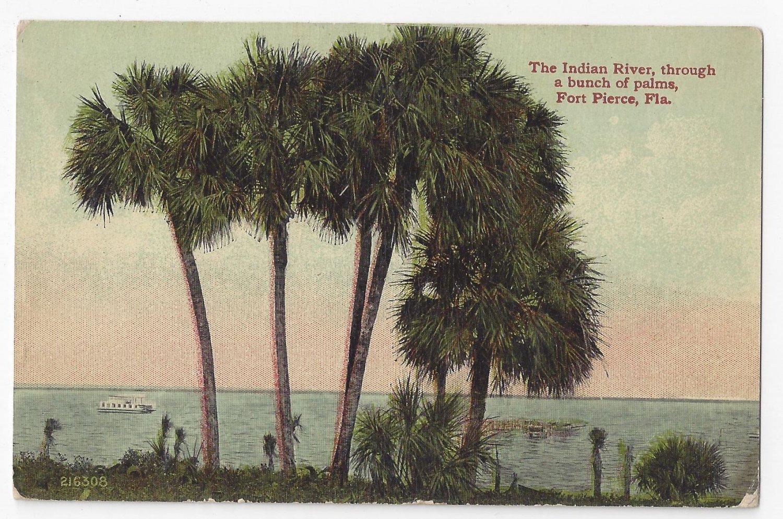 Fort Pierce FL Indian River Palms Vintage Leighton Valentine ca 1910 Postcard