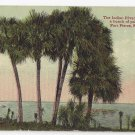 Fort Pierce FL Indian River Palms Vintage Leighton Valentine ca 1910 Postcard