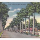 FL Stately Avenue of Palms Florida Vintage 1959 Linen Postcard