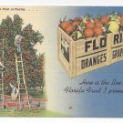 Florida Fruit Crate Oranges Grapefruit Vintage  Linen Postcard