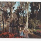 FL Cypress Trees Lake Eloise Florida Vintage 1970 Postcard