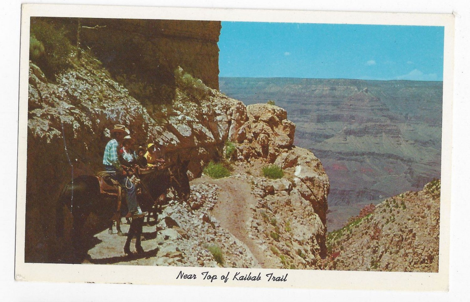 AZ Grand Canyon National Park Kaibab Trail Vintage Fred Harvey Postcard