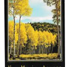 New Mexico Golden Aspens Vintage Postcard 4X6 NM