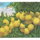 California Grapefruit Vtg Linen Postcard