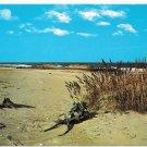 Outer Banks NC Beach Coast Driftwood Vtg Geo. B Sides Postcard