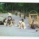 Alaska Dog Sled Team McKinley Park Husky Alaska Joe Postcard 4x6