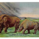Titanotheres Colorado Museum Natural History Mural Postcard