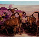 Barbaray Sheep Aoudad Philadelphia Academy of Natural Sciences Postcard