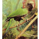Philadelphia Academy Natural Sciences Birds Hawk Headed Parrot Postcard