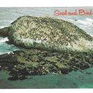 California Monterey Seal Rock Birds Sea Lions 17 mile Drive Postcard