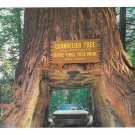 CA Chandelier Drive Thru Tree Park Redwood Vintage Postcard