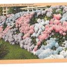 Hydrangeas in Full Bloom Vintage Linen Postcard Flowers