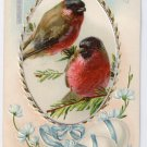 Vintage Easter Postcard Birds Finches Cross Embossed Chromo 1909