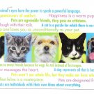 Modern Advertising Postcard Veterinarian Appt Reminder Cats Dogs Animals
