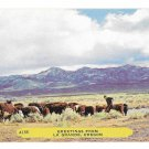 Greetings from Le Grande Oregon Cattle Steer Plains Vintage Noble Postcard